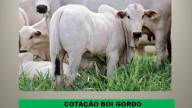 Cotação Semanal (03/02/2017 a 10/02/2017), boi gordo e vaca gorda