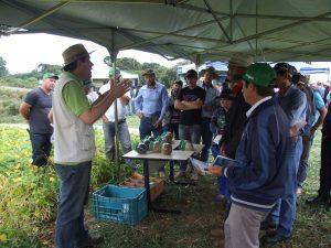 Tarde de Campo Regional foi realizada em Pinhão