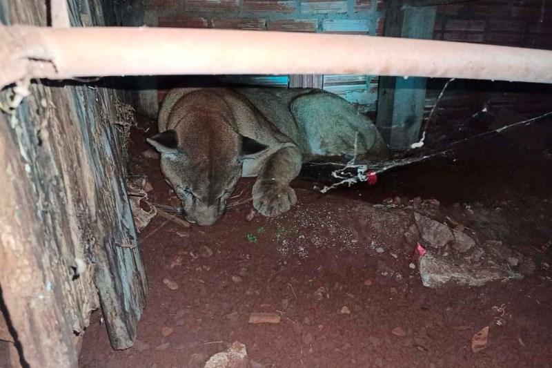 Polícia Ambiental do Paraná prende 231 pessoas e resgata 234 animais e mais de 2 mil aves silvestres no semestre
